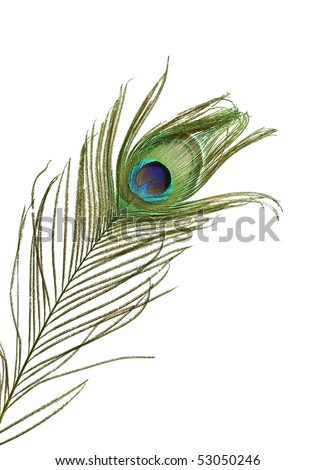 Colorful peacock feather detail isolated on white background - stock photo