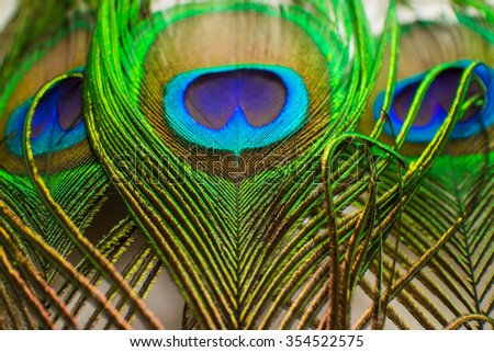 Colorful peacock feathers - stock photo