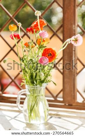 Colorful persian buttercup flowers (ranunculus) - stock photo
