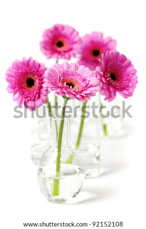 colorful pink daisy gerbera flowers in  vases - stock photo