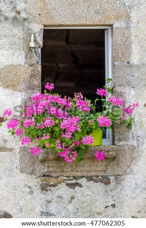 colorful pink geraniums dressing windowsill in old traditional building