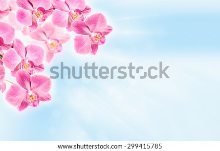 Colorful pink orchid on abstract blurred blue background with copy-space - stock photo