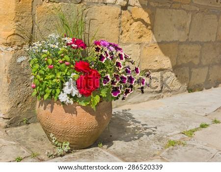 Colorful plants in a terracotta pot, including begonia, petunia, fuchsia, impatiens - stock photo