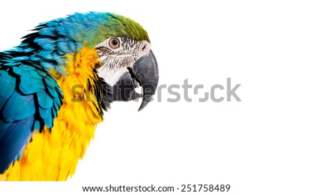 Colorful portrait of a parrot macaw - stock photo