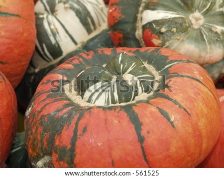 colorful pumpkin - stock photo