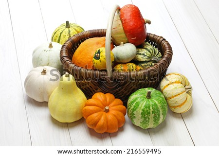 colorful pumpkin and squash collection - stock photo