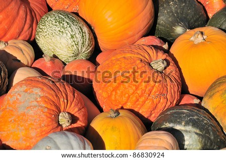 Colorful Pumpkin Collection - stock photo