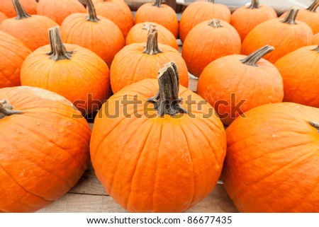 Colorful pumpkins at the farmer market. - stock photo