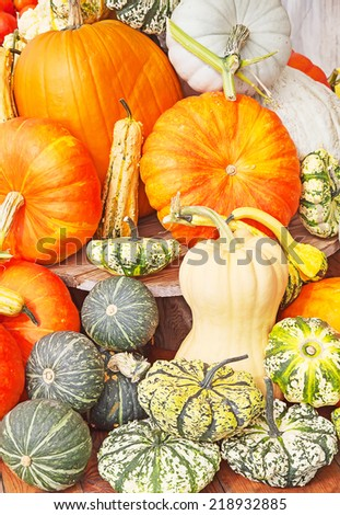 Colorful pumpkins collection on the autumn market - stock photo