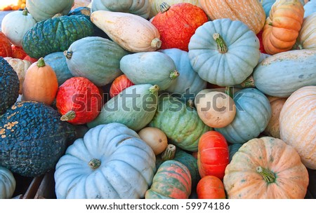 Colorful pumpkins collection on the market - stock photo