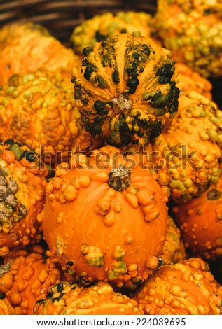 Colorful pumpkins. Halloween pumpkins - stock photo