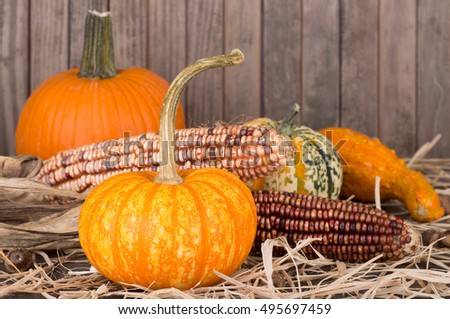 Colorful pumpkins, squash and corn on a straw surface with wooden background