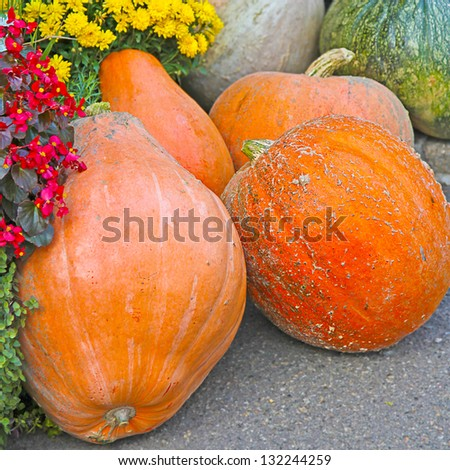 colorful pumpkins with a flowers - stock photo