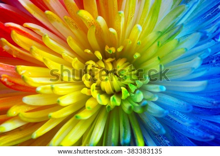 Colorful rainbow flower background