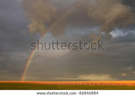 Colorful rainbow over a corn field in Missouri.