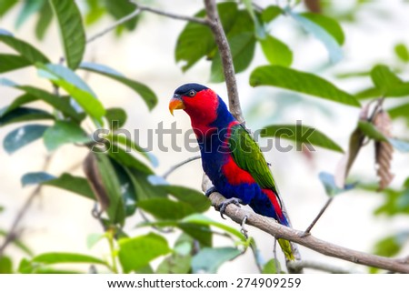 colorful rainbow parrot on the branch - stock photo