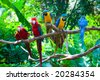 Colorful red and blue macaw perched on a branch. - stock photo