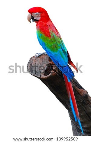 Colorful Red-and-green Macaw isolated on white background