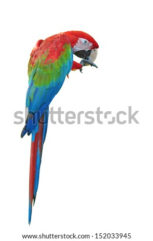 Colorful Red-and-green Macaw isolated on white background  - stock photo