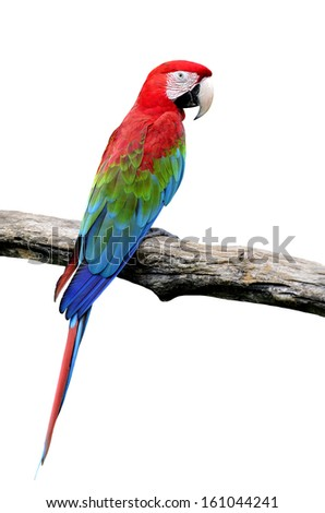 Colorful Red-and-green Macaw Parrot bird isolated on white background (green-winged macaw)