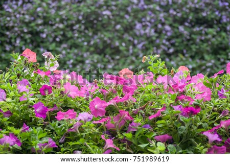 colorful red and pink flower over blurry green background