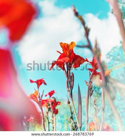 Colorful red flowers on blue sky/ Selective focus - stock photo