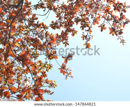 colorful red leaves against blue sky