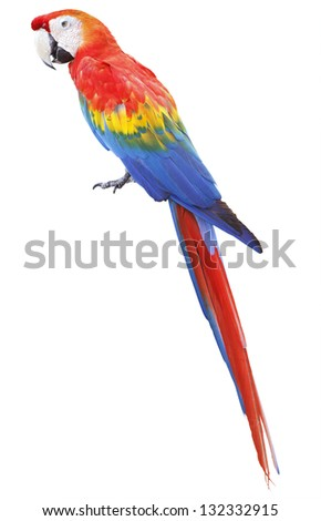 Colorful red parrot macaw isolated on white background - stock photo