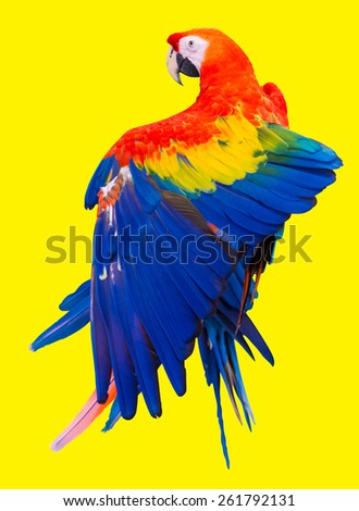 Colorful red parrot macaw on yellow background with clipping path - stock photo