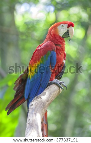 Colorful red-yellow-blue parrot at Birds Park, Foz do Iguazu, Brazil - stock photo