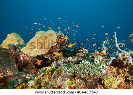 Colorful reef and anthias fish