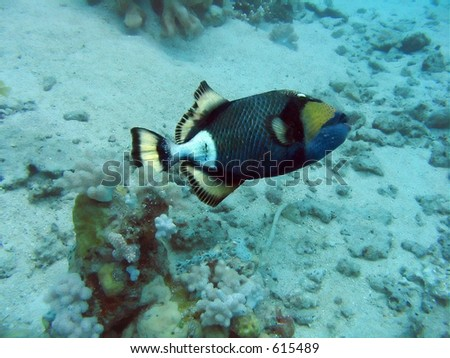Colorful reef fish over coral bottom