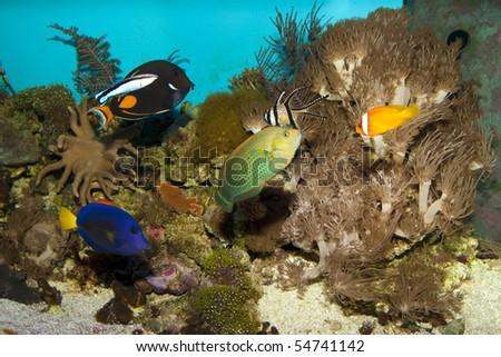 Colorful Reef Fishes in Aquarium - stock photo