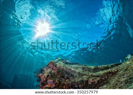 colorful reef underwater landscape with fishes and corals - stock photo
