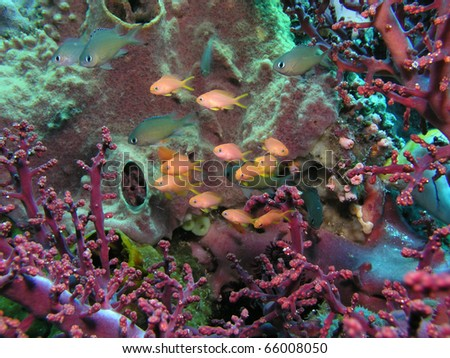 Colorful reeflife - stock photo