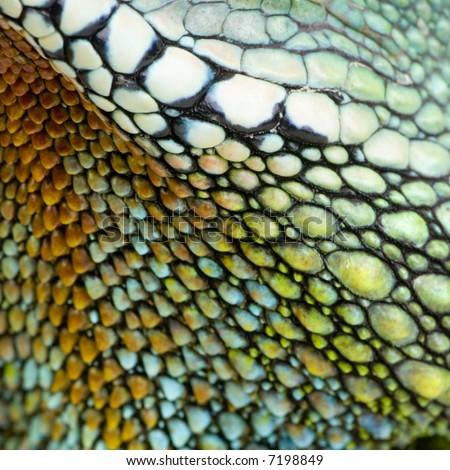 colorful reptile skin - stock photo