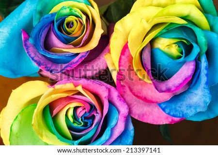 Colorful roses flower background - stock photo
