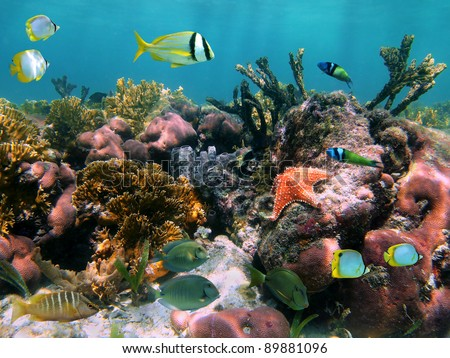 Colorful sea life in a coral reef with tropical fish and a starfish - stock photo