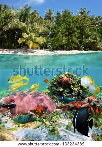 Colorful sea life underwater and split by waterline, tropical beach shore with vegetation - stock photo