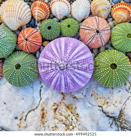 colorful sea urchins and shells on white rock and pebbles beach