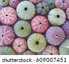colorful sea urchins on wet...