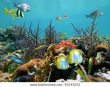 Colorful seabed with corals and tropical fish in the Caribbean sea - stock photo