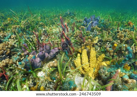 Colorful seabed with sea sponges on a coral reef, Caribbean, Panama - stock photo