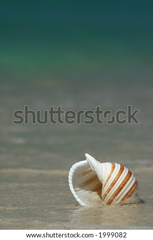 Colorful Seashell in Water on a Beach - stock photo