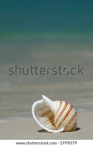 Colorful Seashell on a Sandy Beach - stock photo