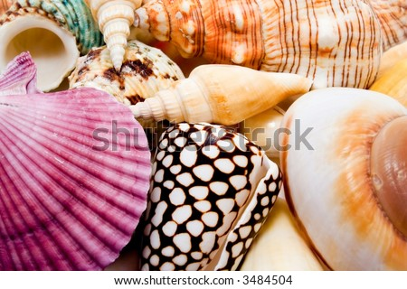 Colorful seashells - stock photo