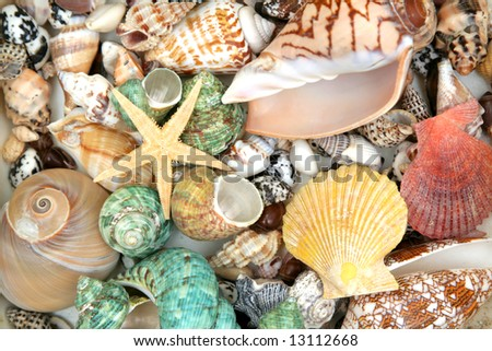 Colorful seashells background and star - stock photo