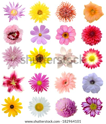 Colorful seasonal blooms collection - stock photo