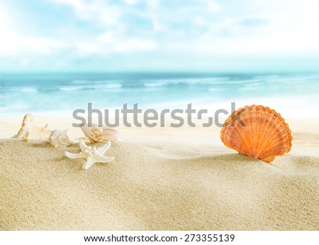 Colorful shells on the beach. - stock photo