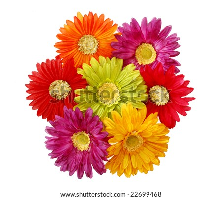 colorful silk gerbera daisies - stock photo